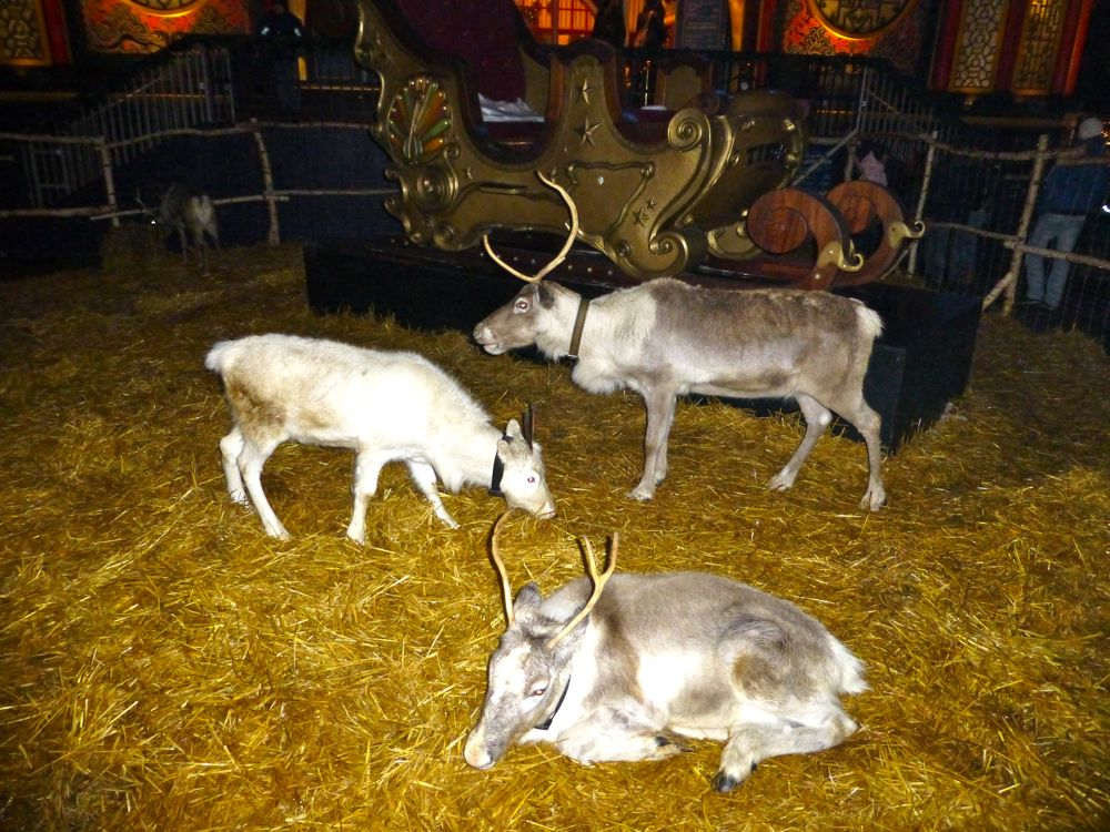 Santa's reindeer at Tivoli Gardens, Copenhagen, Denmark