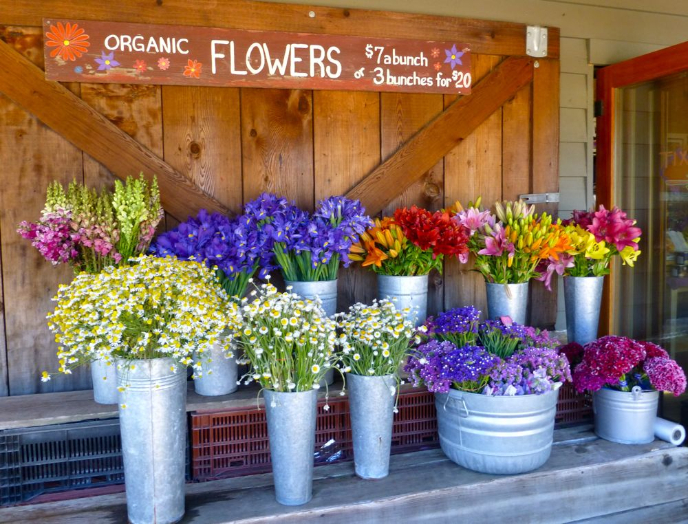 Carmel Valley, California, flowers at Earth Bound Farm