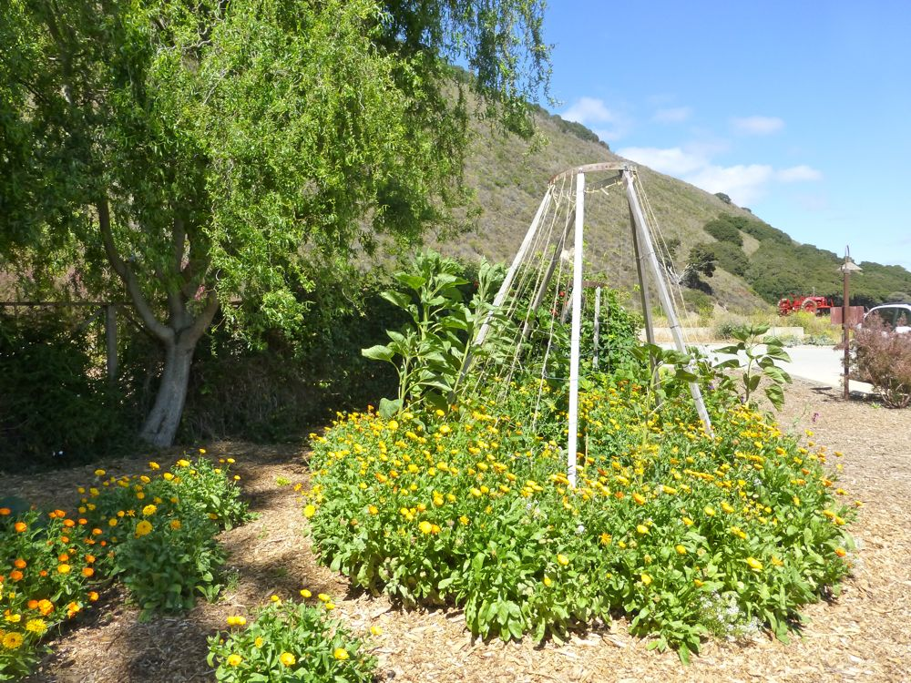 Carmel Valley, California, growing flowers at Earth Bound Farm