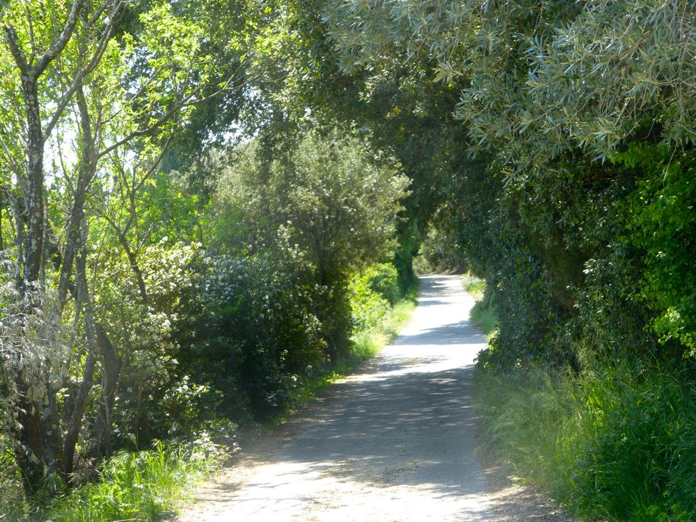 Lane in Lourmarin, Vaucluse, Luberon, Provence, France