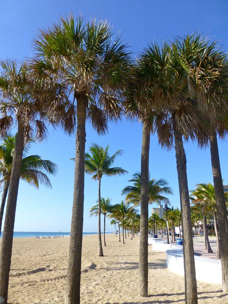 Palm Trees, Fort Lauderdale Beach, Florida, USA