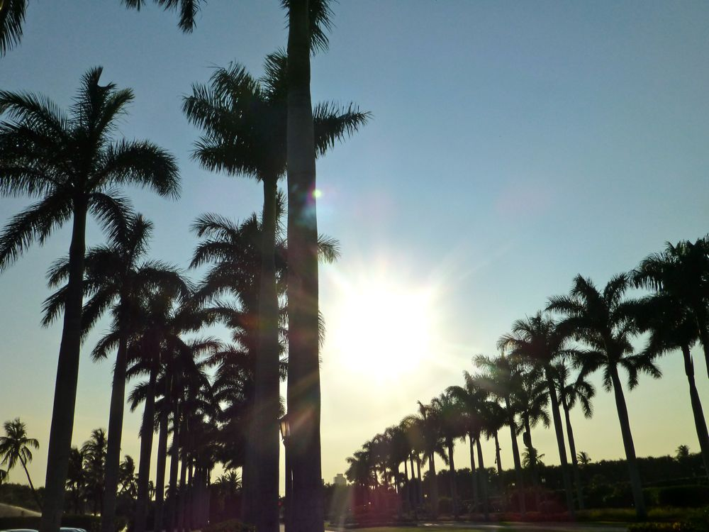 Sunset by the Palm trees, West Palm Beach, Florida, USA
