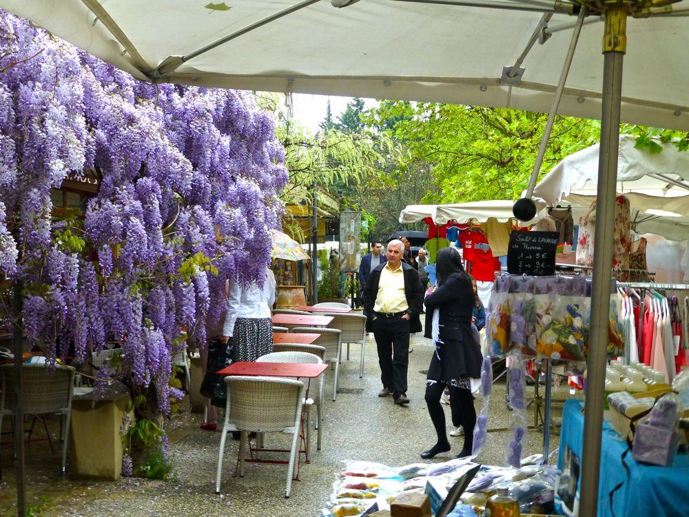 Wisteria at Lourmarin's market Luberon, Provence, France