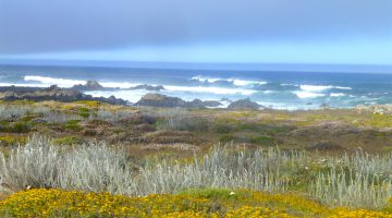 17 Mile Drive near Carmel, California, USA