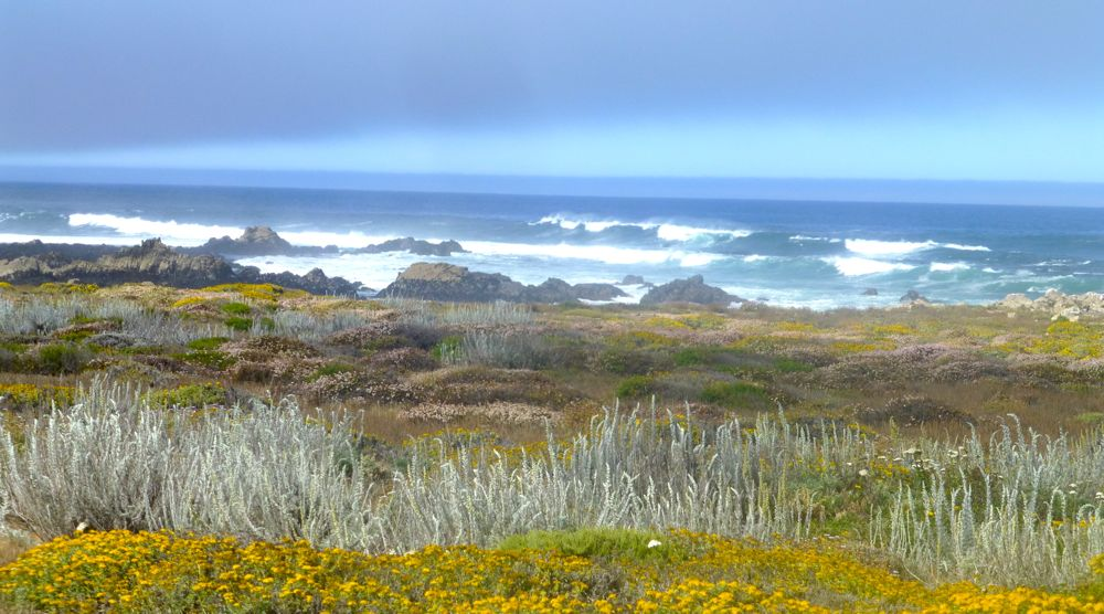 17 Mile Drive near Carmel California