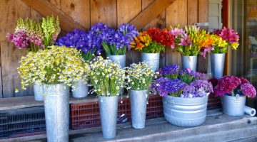 Carmel Valley, California, flowers at Earth Bound Farm