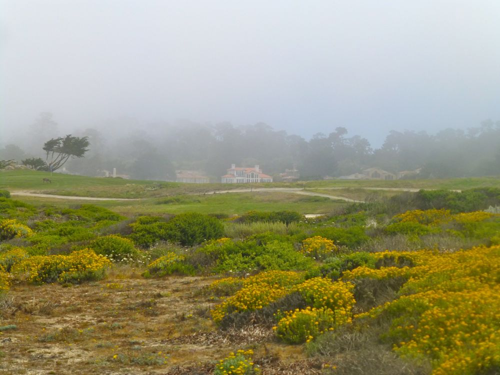 Fog on 17 Mile Drive, California