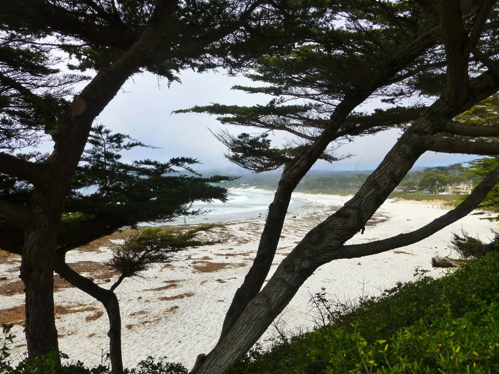 Fog rolling in, through the Cyprees trees onto Carmel Beach, Carmel, California, USA