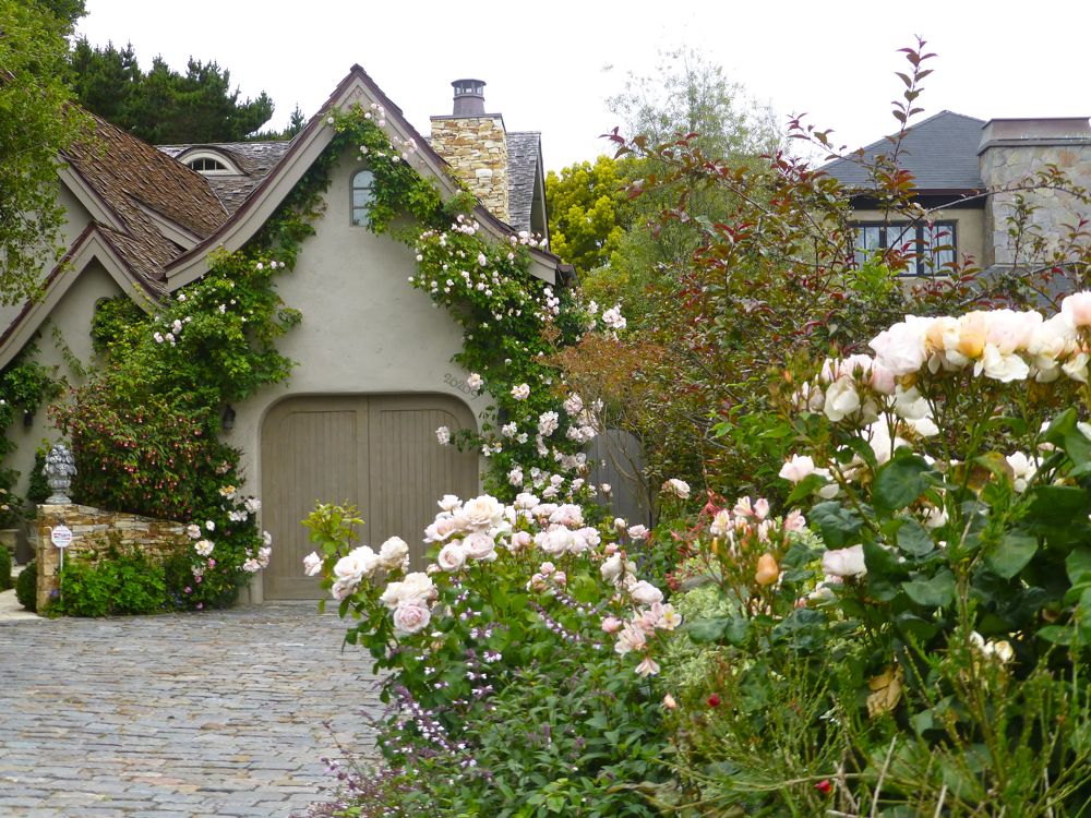 Rose garden in Carmel-by-the Sea, California