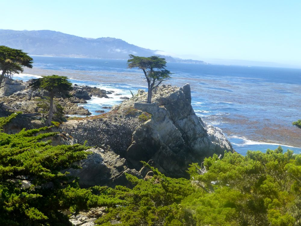 View of the Lone Cypress on 17 Mile Drive, California