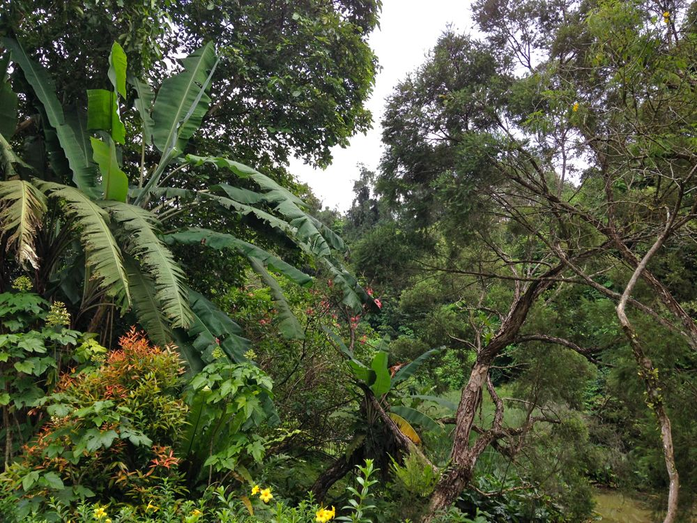 Singapore's Tropical Fauna and Foliage