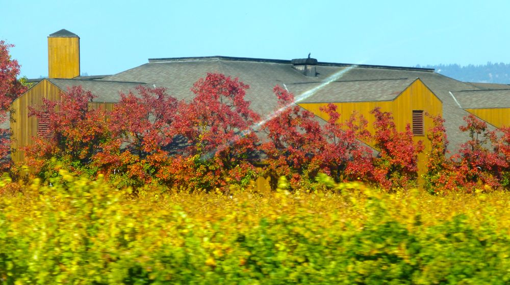 Californian Napa Valley winery in November