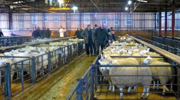The Malton Sheep Market, Malton, North Yorkshire, England