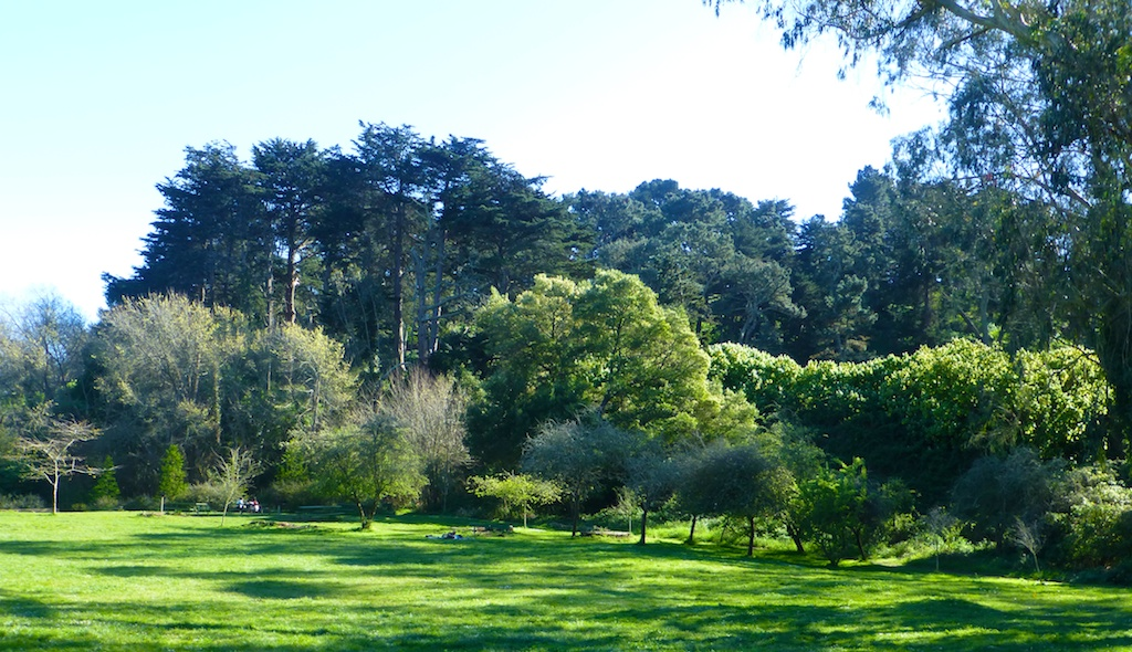 Spring shadows in Golden Gate Park, San Francisco