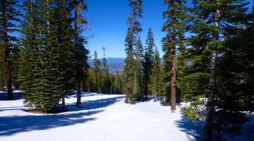Through the trees on the Northstars' slopes, Lake Tahoe, California, USA