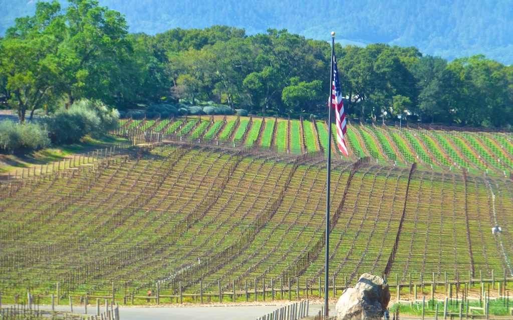 Stars and Stripes in California's Napa vines in March