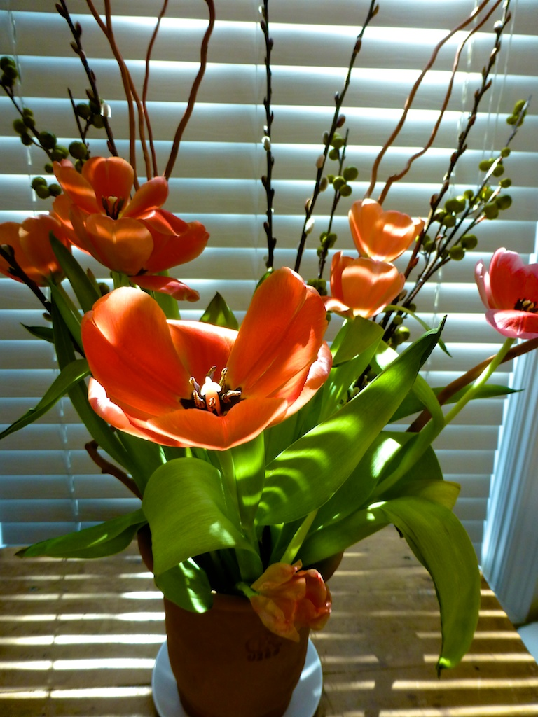 vase of springtime tulips