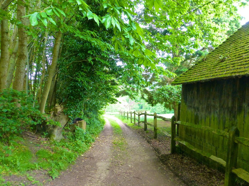 Driveway in the Surrey Woodlands, England, where Rosie is staying