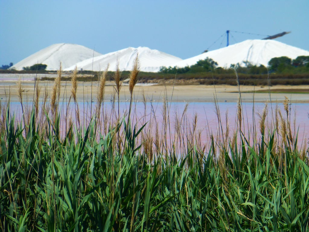 Salt at Aigues-Mortes, Camargue, France
