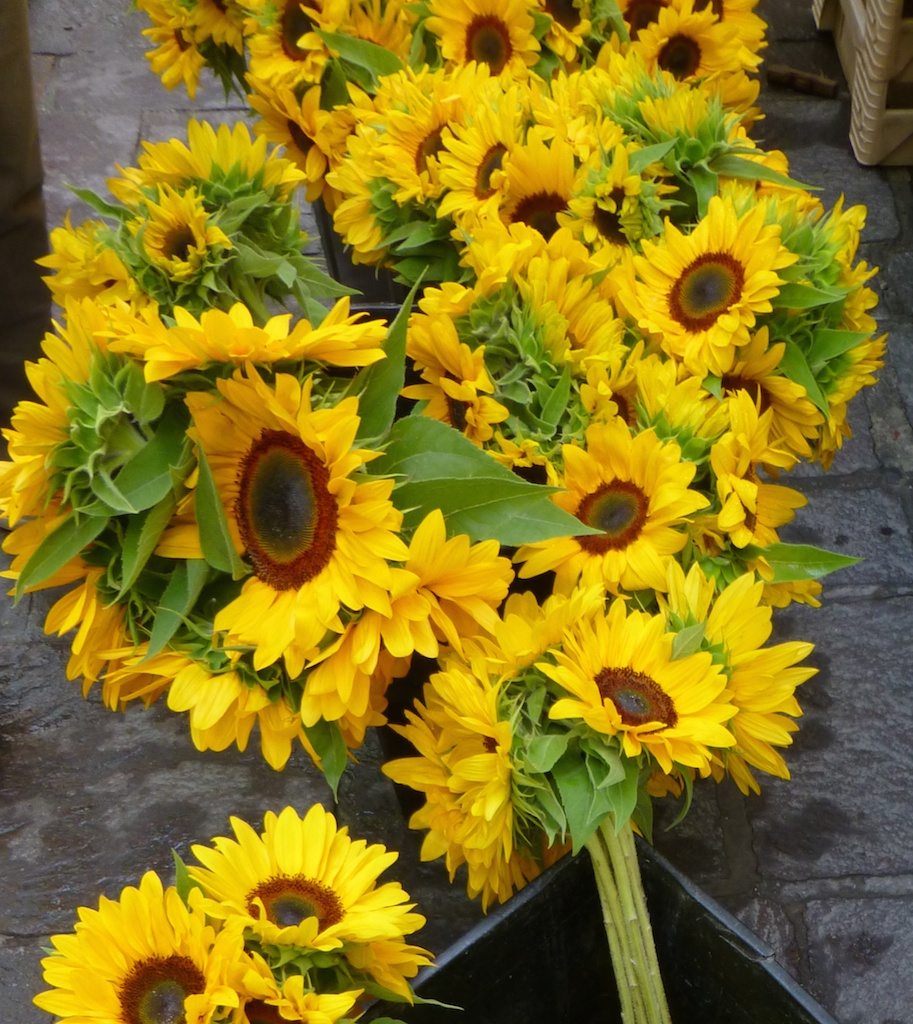 Sunflowers at Wednesday Market in Uzes