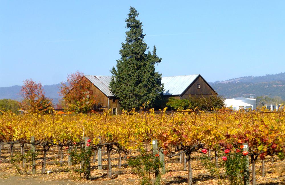 Californian, Napa Valley Winery in Autumn