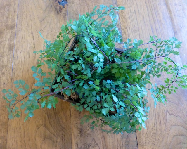 a small potted plant to decorate the dining table