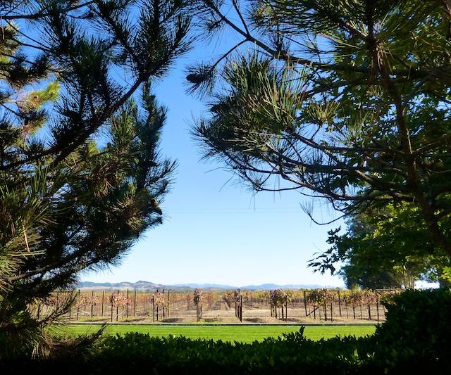Vineyards through the pines at Sonoma