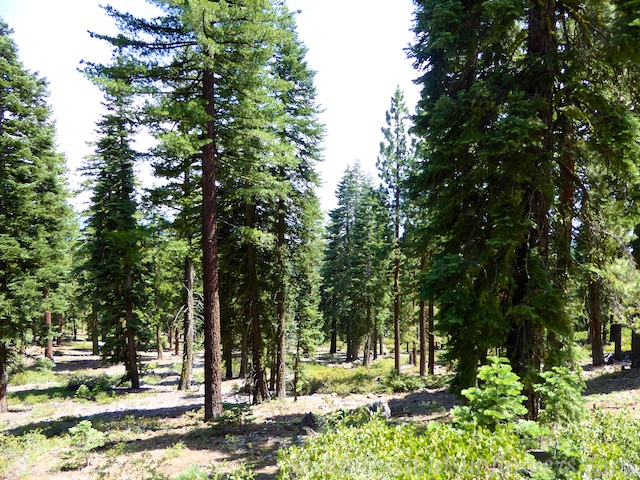 Hiking the Tahoe Rim Trail, Lake Tahoe, California