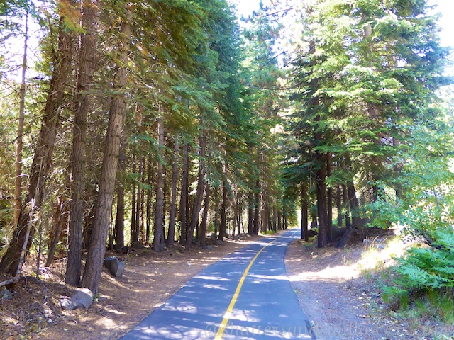 The trail through the trees by the Truckee River