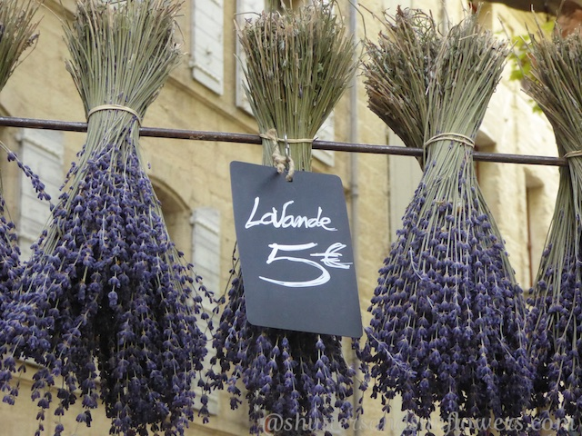 lavender in the Uzes market