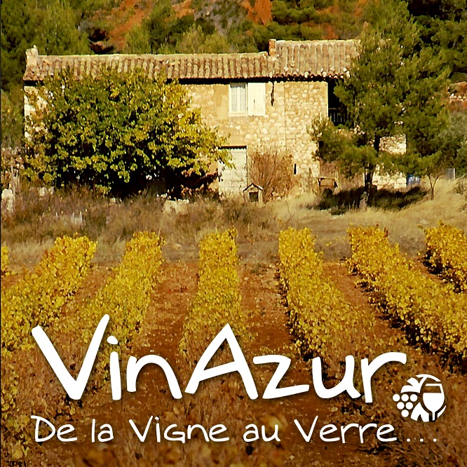 vineyard from Provence, France