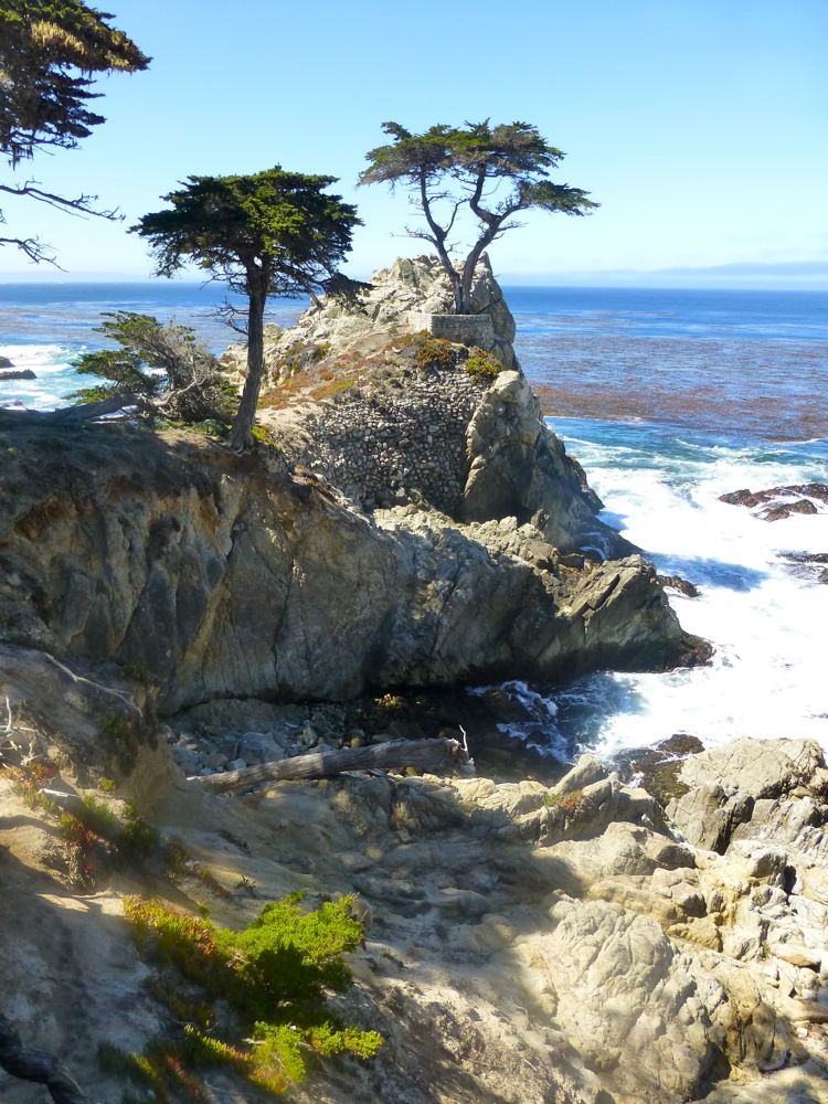 Lone Cypress, 17 Mile Drive, Carmel, California