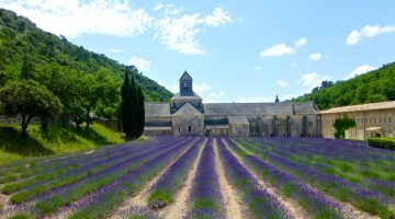 Plan your stay in Lourmarin visit L'Abbaye Notre-Dame de Sénanque, Gordes, Luberon, Provence