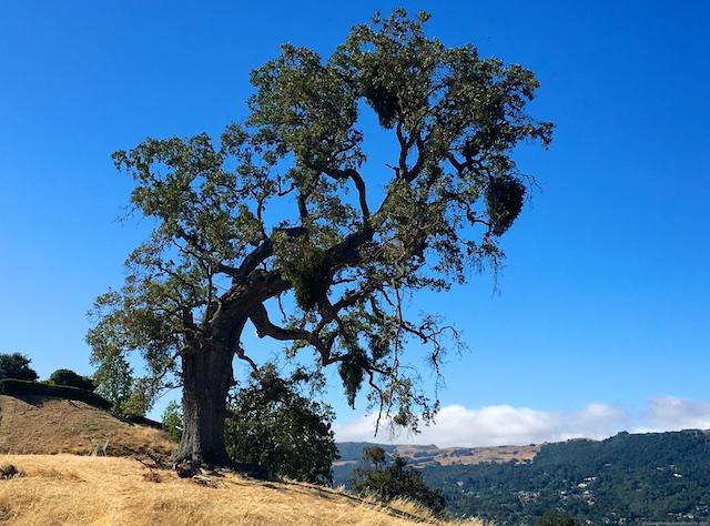 Las Trampas Ridge, California views