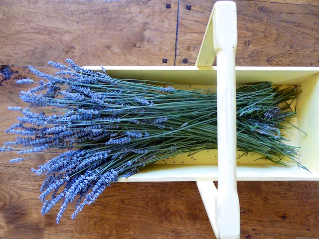 Lavender Basket from a Californian Garden