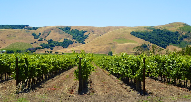 Vineyards of Sonoma, California