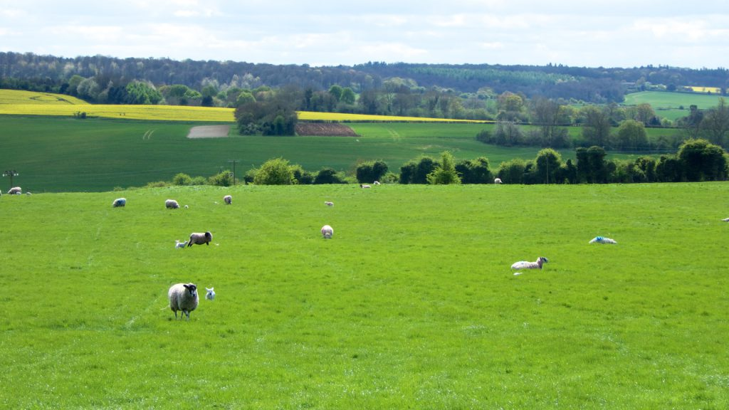 Springtime in England, rolling countryside