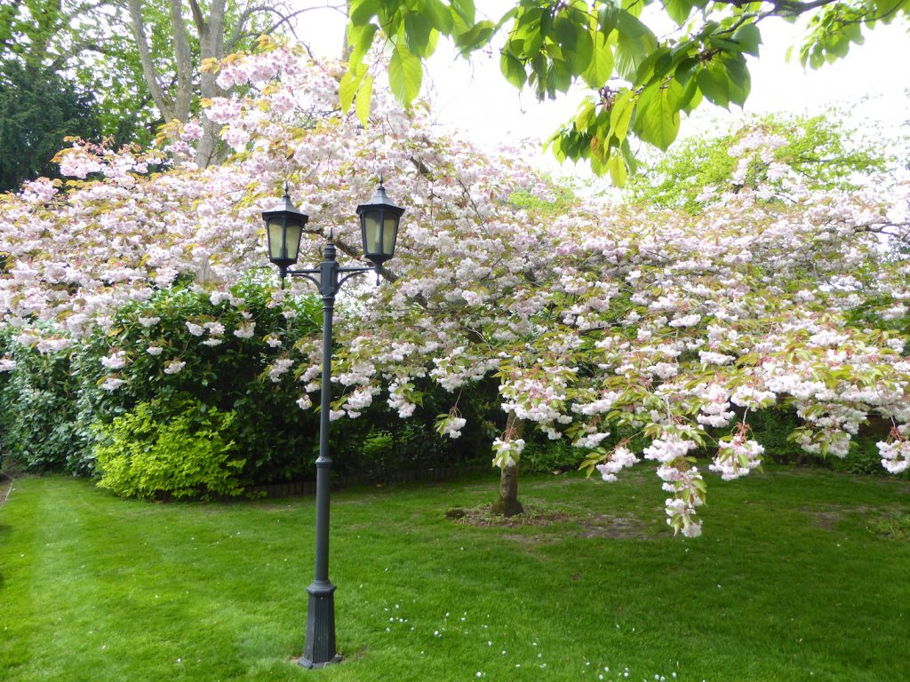 Springtime in England, spring blossoms