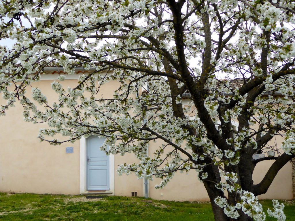 Cherry trees in bloom outside Maison des Cerises, Lourmarin