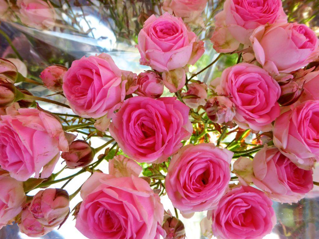 Roses in the Lourmarin market, Lourmarin, Luberon Vaucluse, Provence