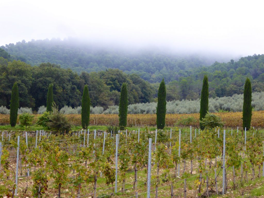 View of the vines in Autumn of Chateau La Coste, near Aix-en-Provence, Provence