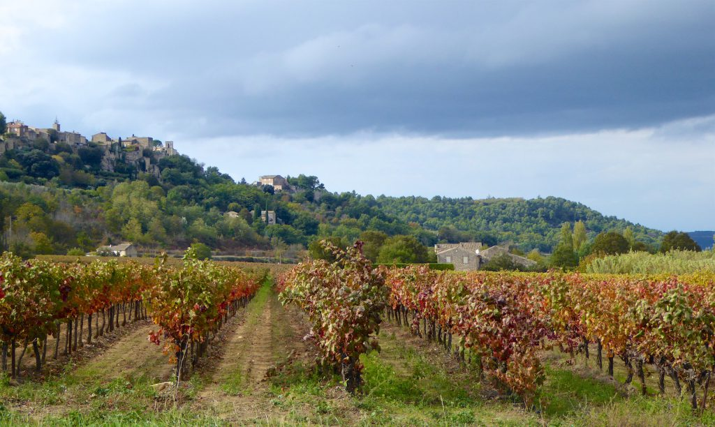 Vineyards by Ménerbes, Luberon, vaucluse, Provence in early winter