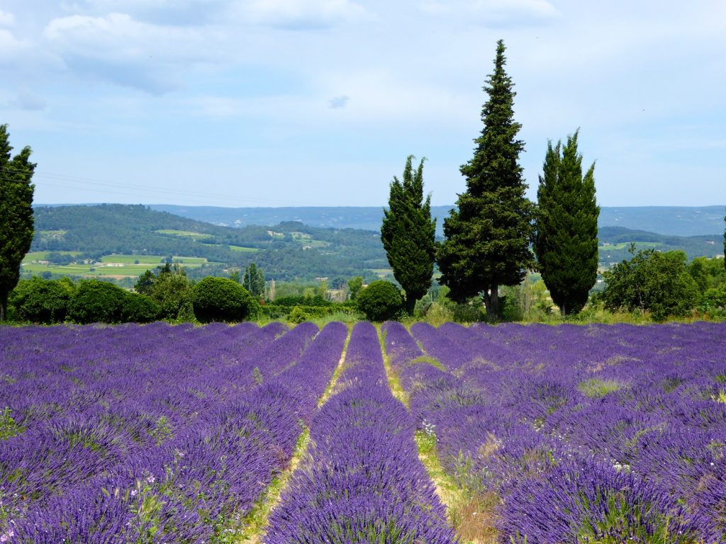 Things I love about Provence, Lavender in the Luberon Valley favorite things in Provence
