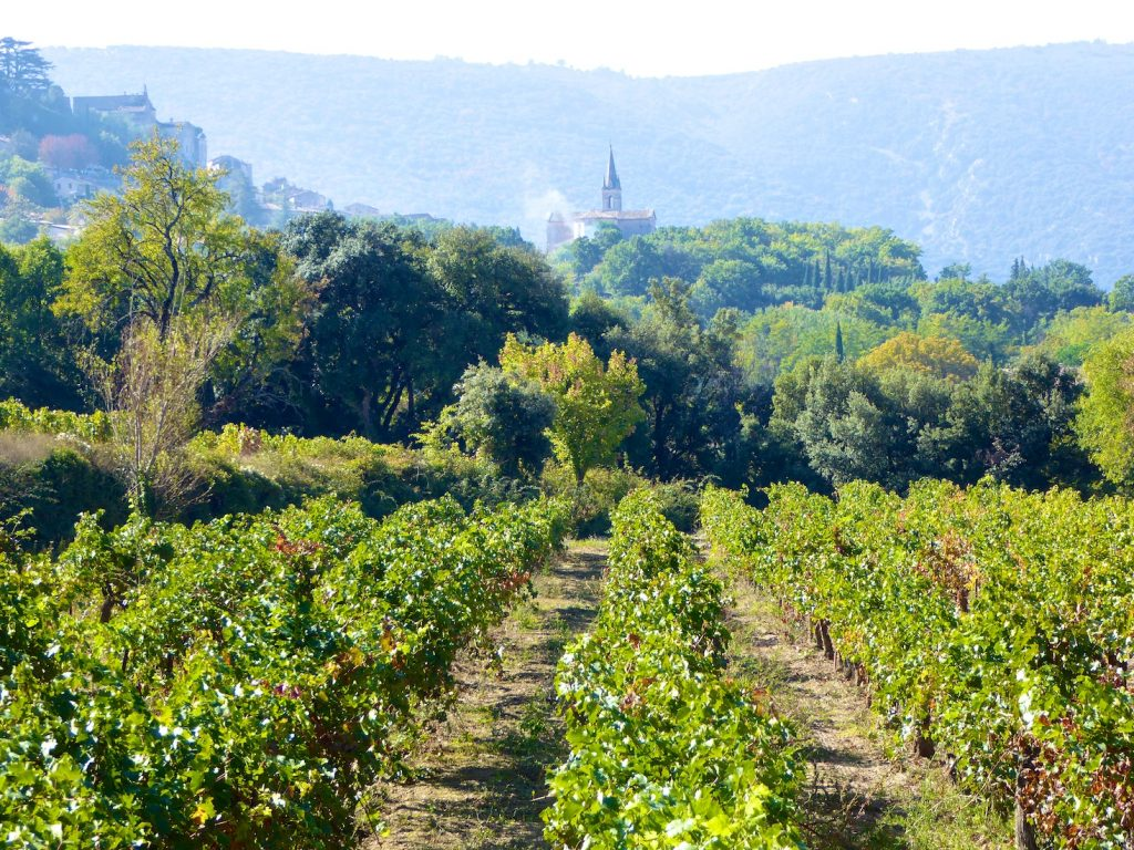 Vineyards of the Provencal wine domains at Chateau Canorgue, Bonnieux, Luberon Provence