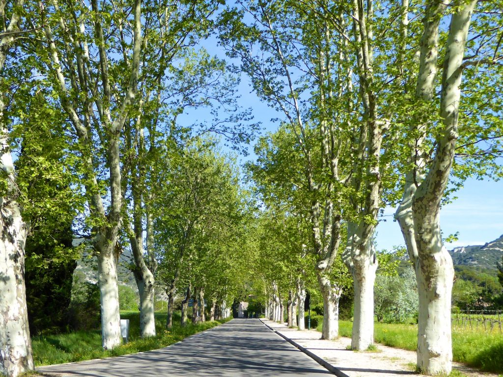 Tree lined avenues and roads of the Luberon, Provence