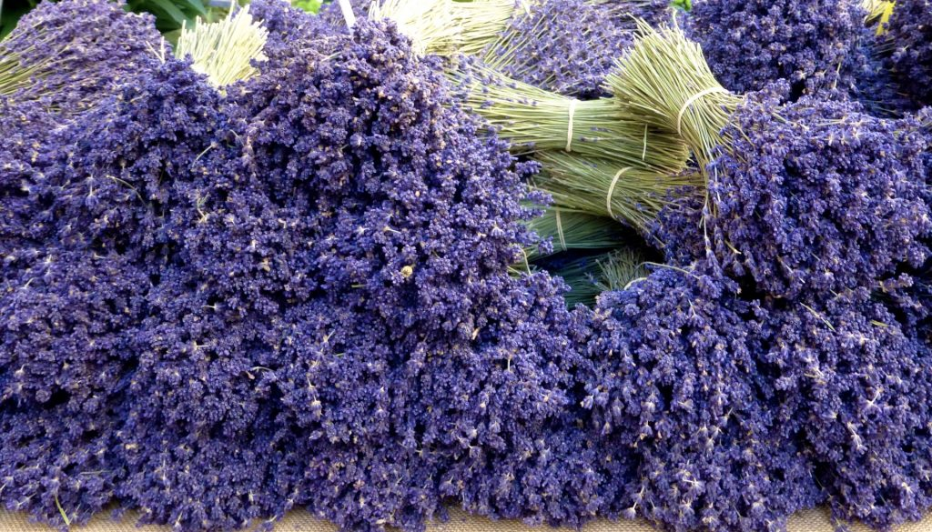 Lavender for sale at The Lourmarin market, Loumrarin, Provence, France