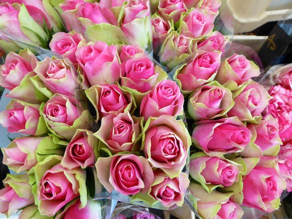 Roses in the Lourmarin market, Lourmarin, Luberon, Provence, France