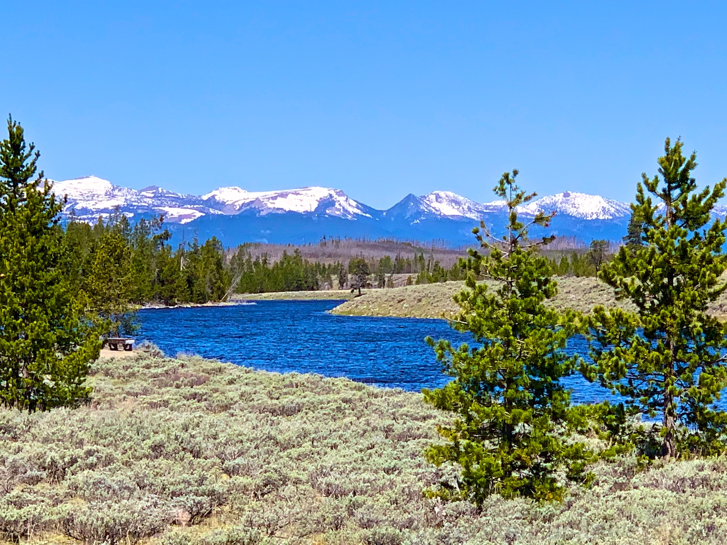 Edge of the Madison River, Yellowstone National Park, USA