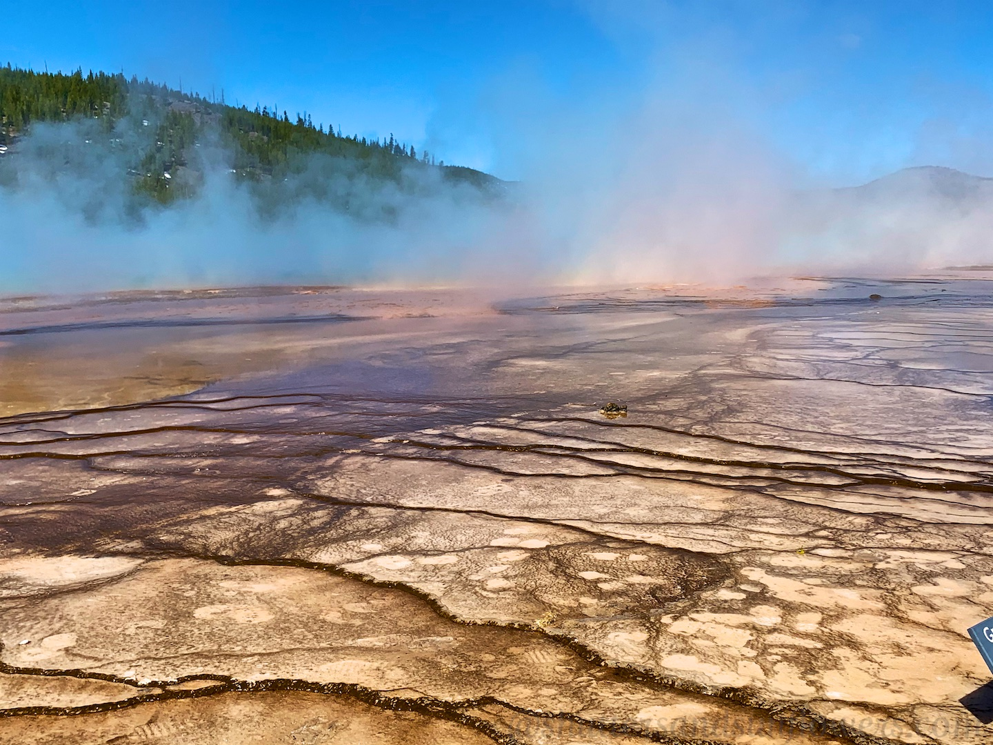 Microbial mat by Grand Prismatic Spring, Yellowstone National Park, USA
