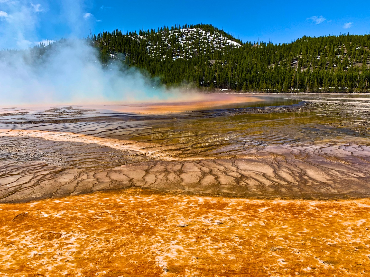 The forest of microorganisms by the Grand Prismatic Spring, Yellowstone National Park, USA